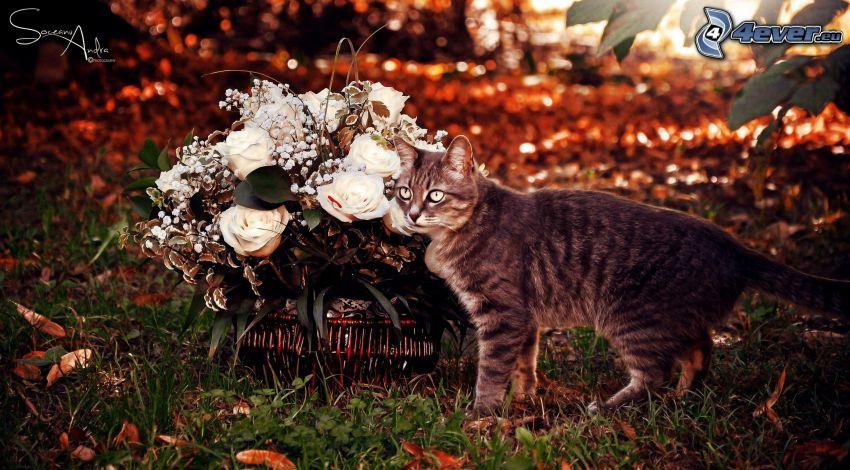 gato, flores blancas, cesta