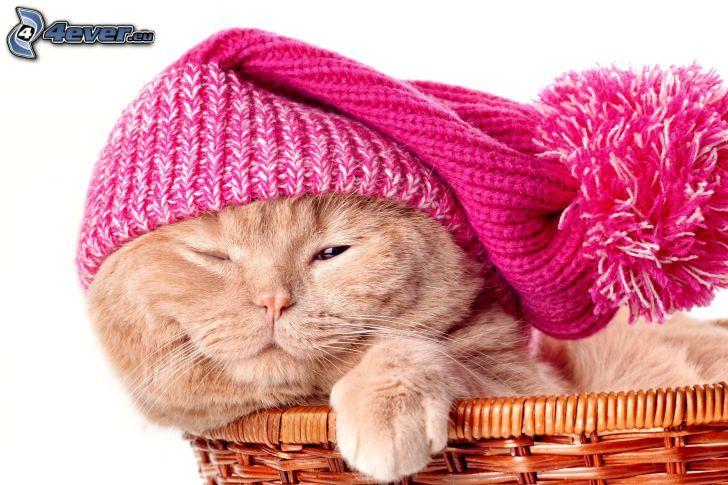 gato, gorro, cesta