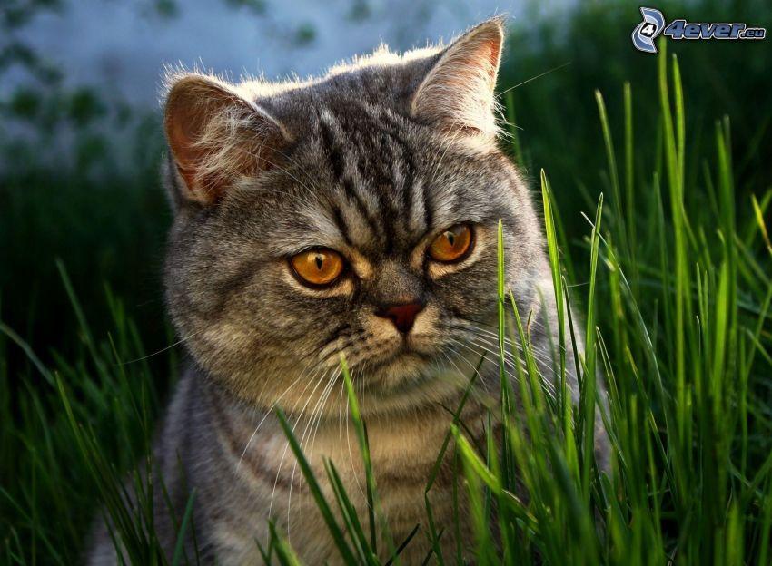 gato, hierba