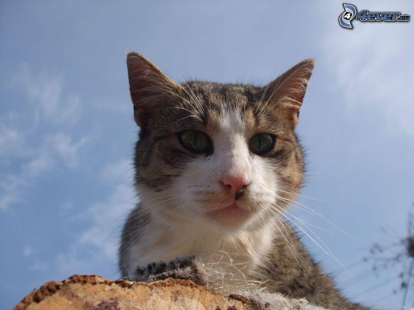 gato, madera, cielo