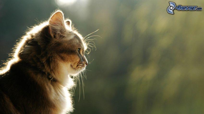gato, mirada