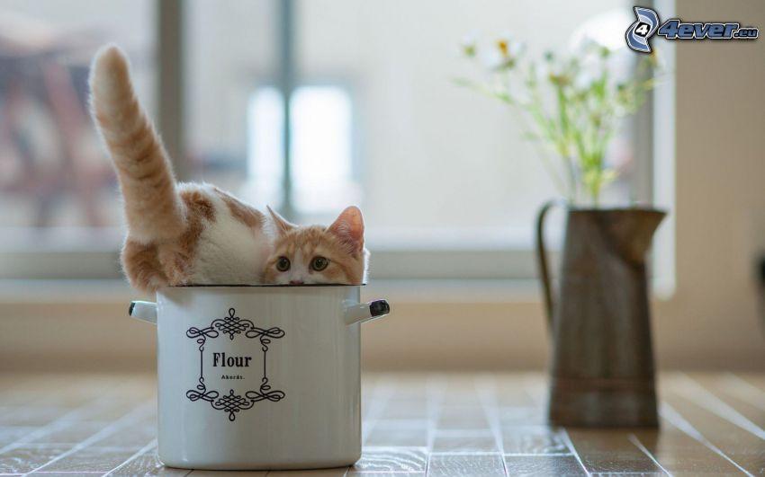 gato, taza
