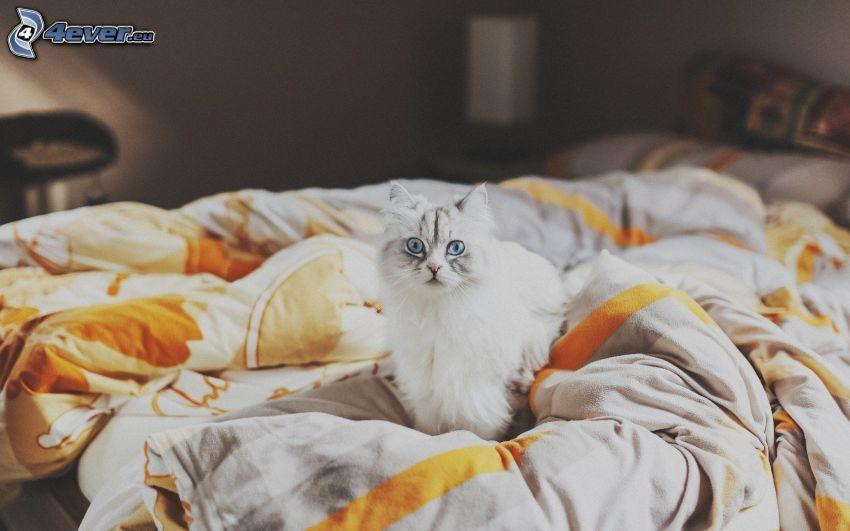 gato blanco, colchón de plumas