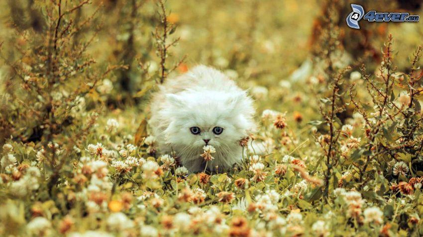 gato blanco, trébol