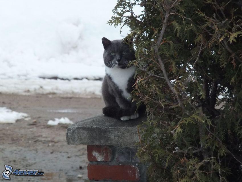 gato blanco y negro, nieve, parapeto, árboles coníferos