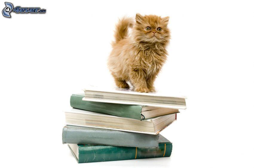 gato de pelo pelirrojo, libros