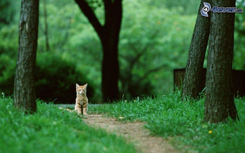 gato de pelo pelirrojo, verde