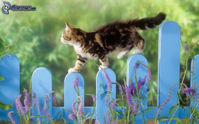 gato en la cerca, gatito manchado, lavanda