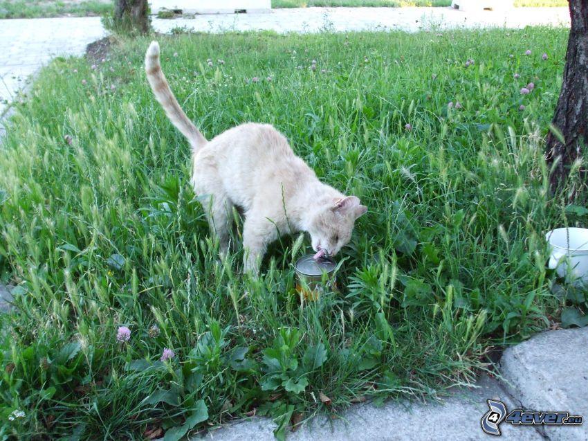 gato en la hierba, estaño, patio