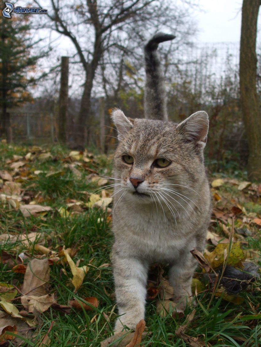 gato en la hierba, hojas secas