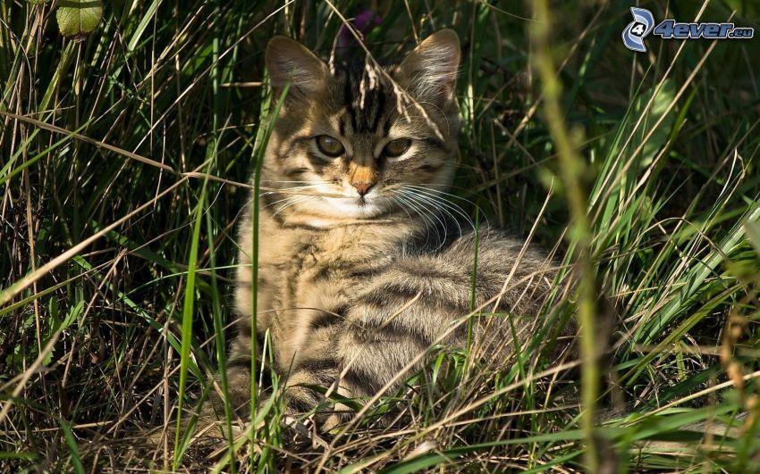 gato en la hierba, relajación