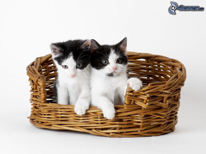 gato en una cesta