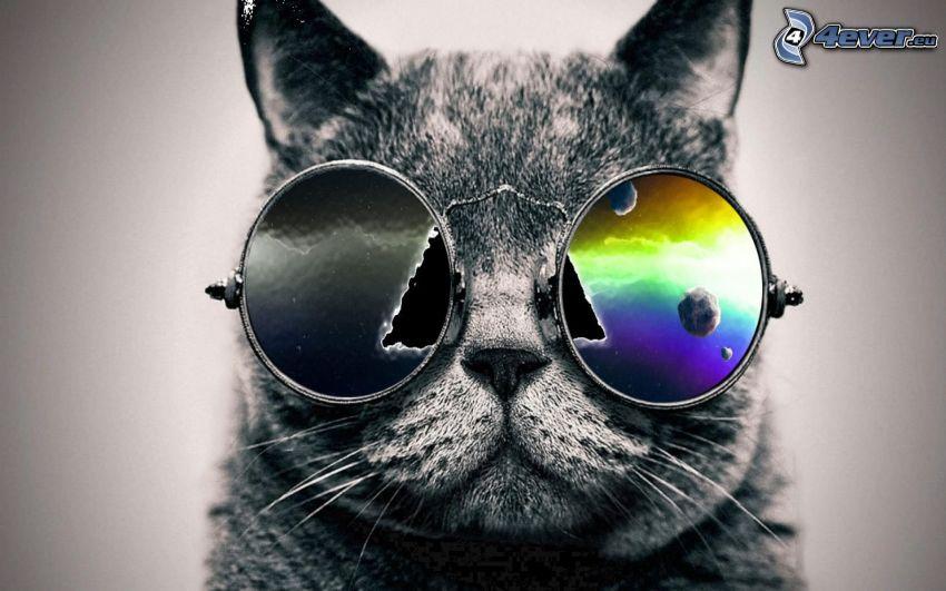 gato gris, gafas de sol