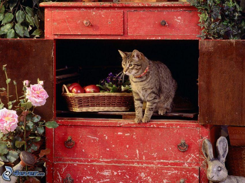gato marrón, armario, cesta