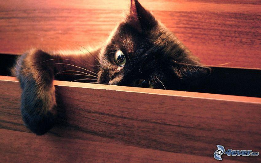 gato negro, cajón