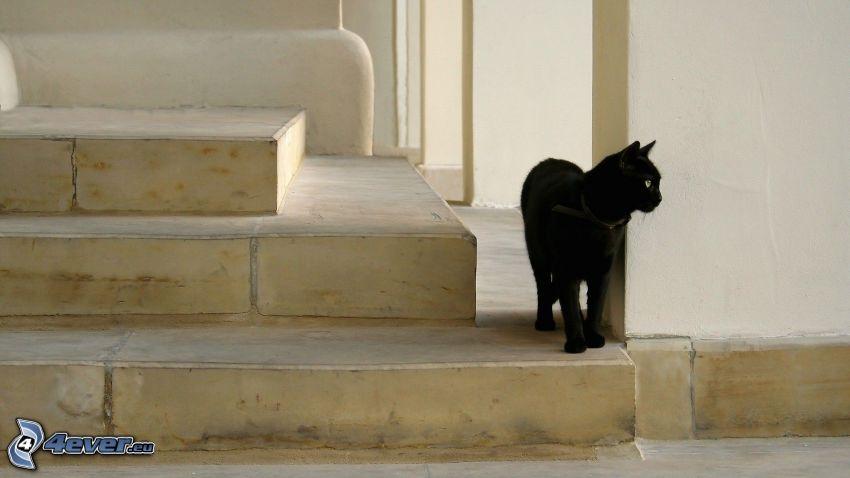 gato negro, escalera