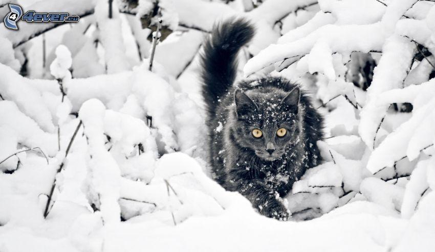 gato negro, nieve