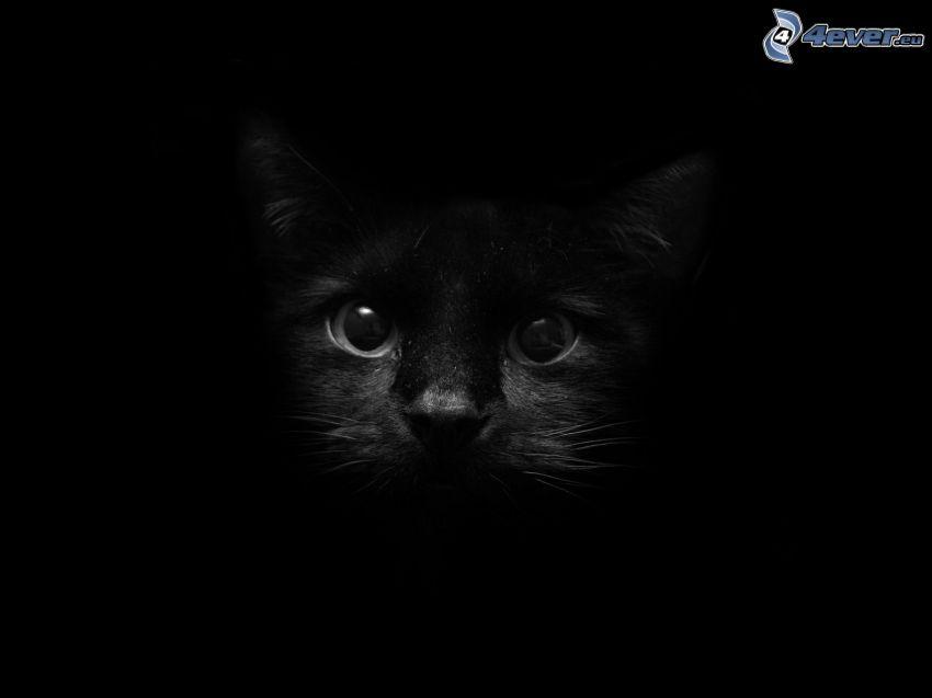 gato negro, oscuridad