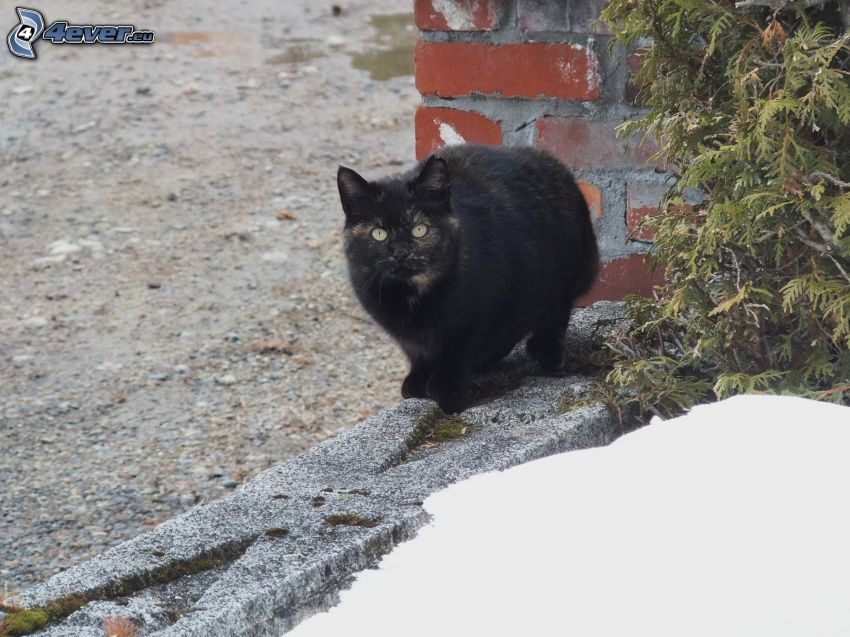 gato negro, parapeto, nieve