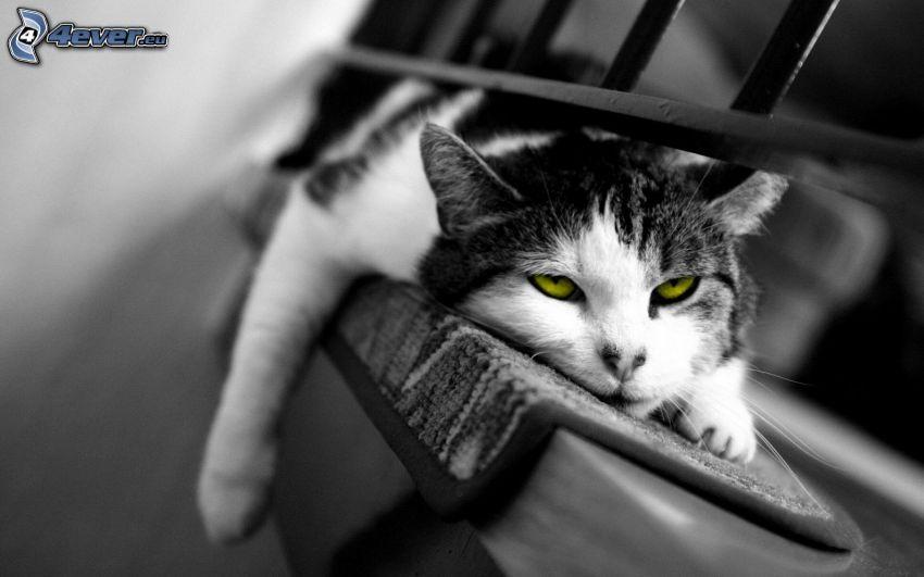 gato perezoso, ojos verdes de un gato, descanso