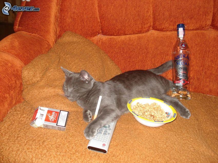 Gato que duerme, cigarrillos, alcohol, mando, sofá