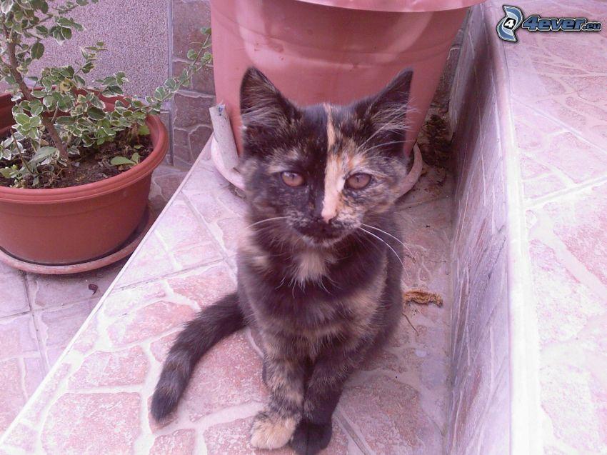 gato variopinto, flor, escalera