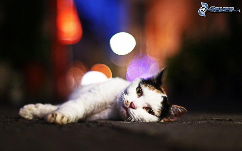 gato variopinto, relajación
