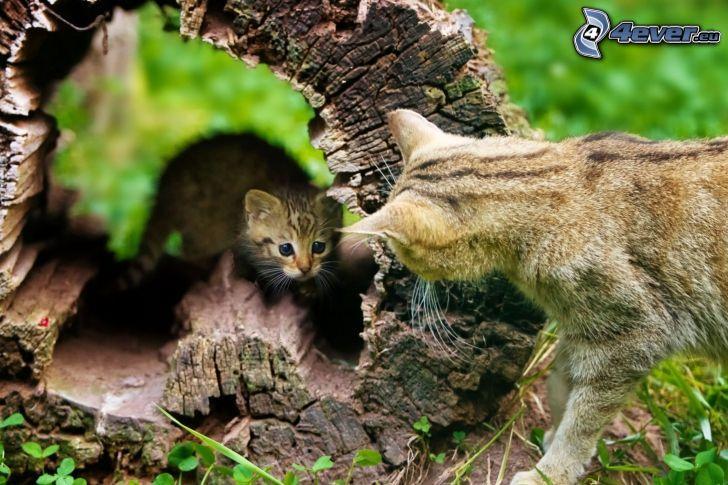 gatos, gatito, tronco seco