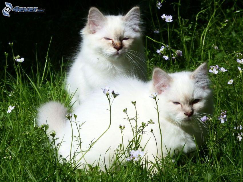 gatos, hierba