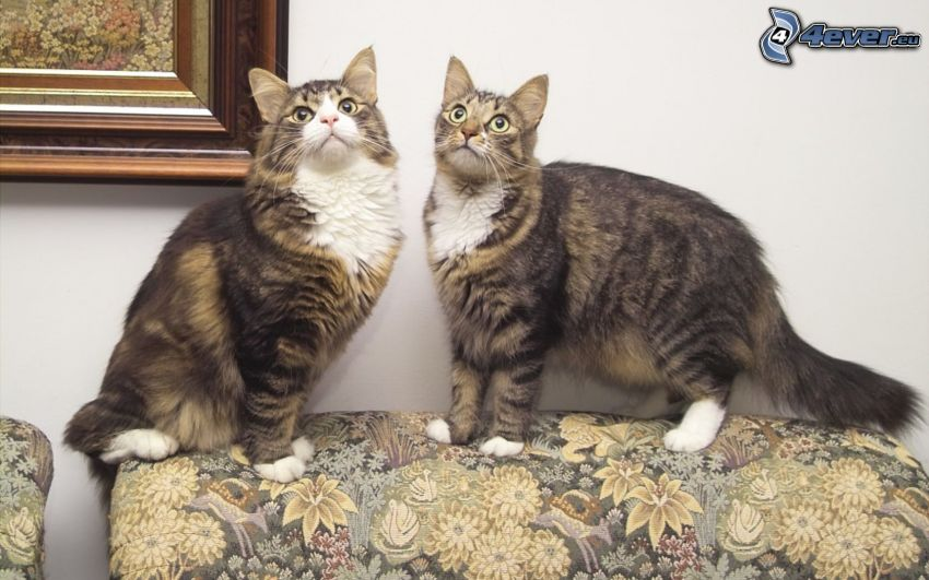 gatos, mirada de gato