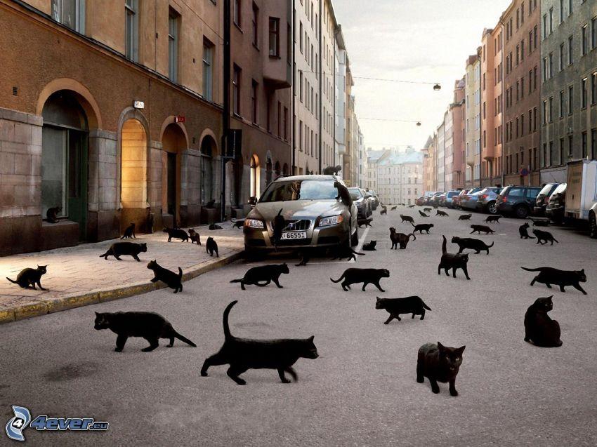 gatos negros, calle