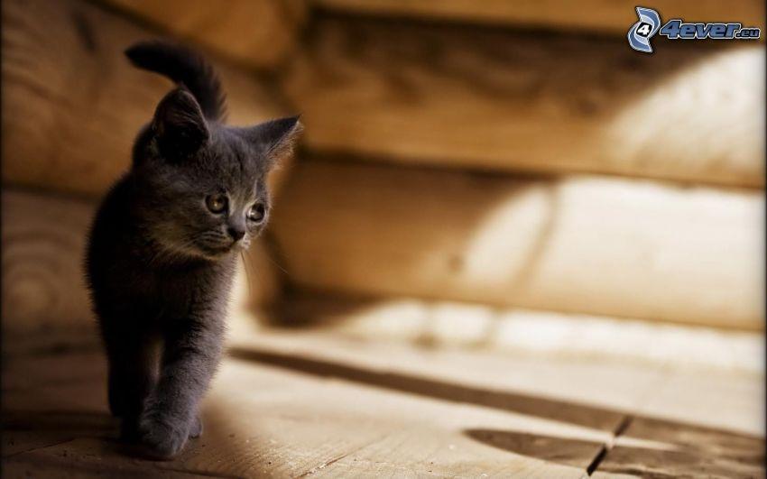 pequeño gatito negro, madera