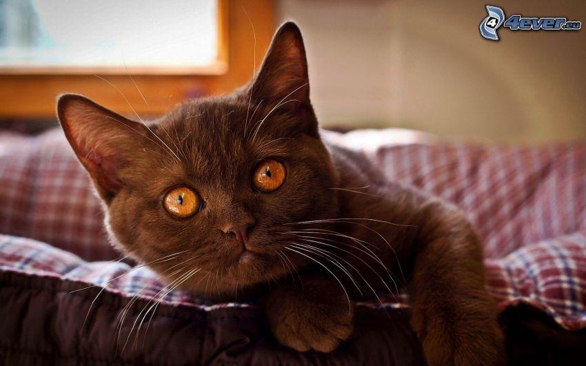 pequeño gatito negro