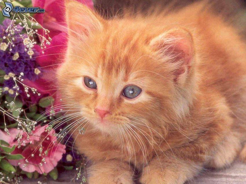 pequeño gato pelirrojo, flores