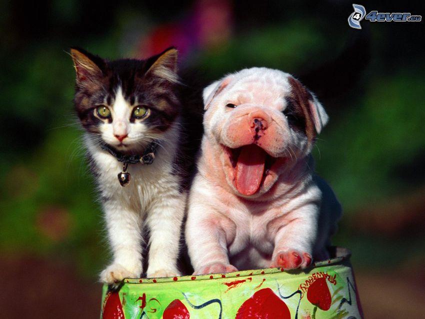 Perro y gato, gatito, cachorro, lengua