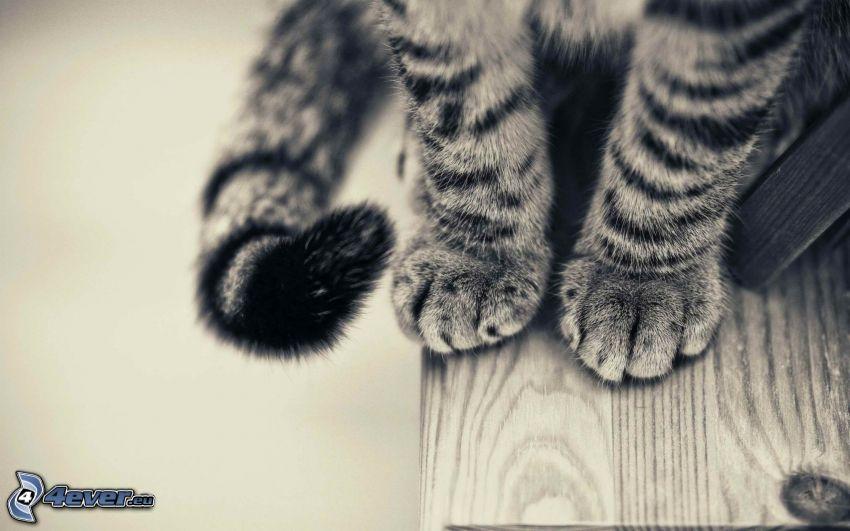 pies, cola, gato