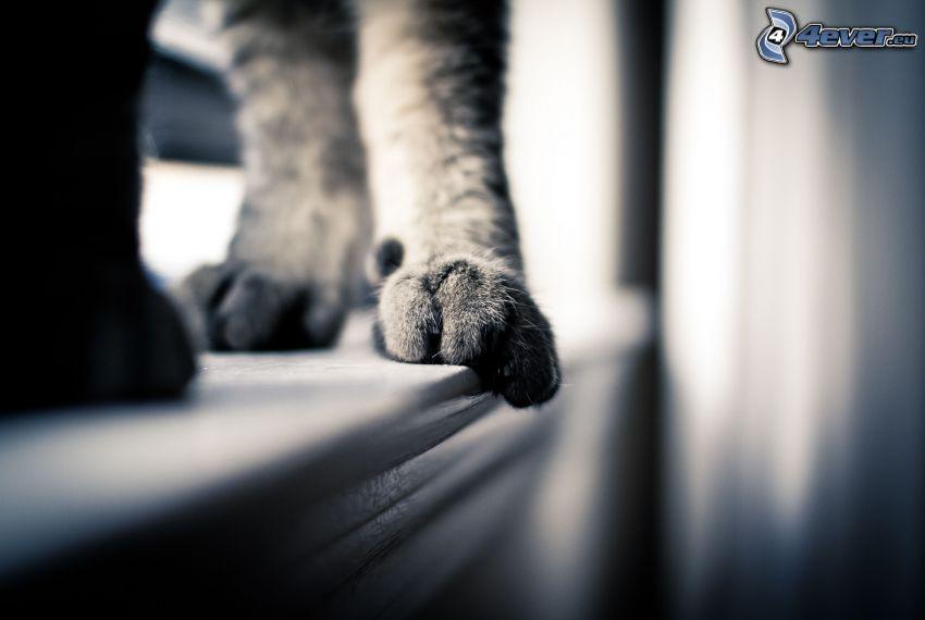 pies, gato, blanco y negro