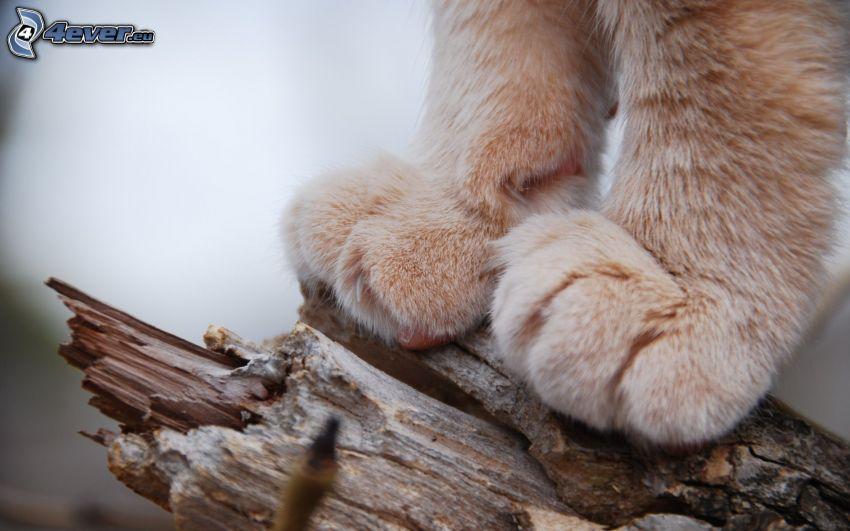 pies, madera