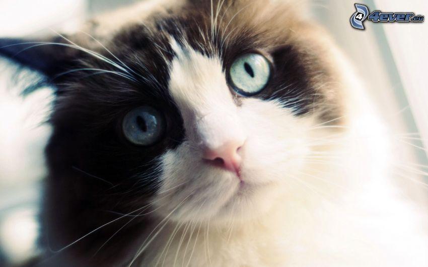 rostro felino, mirada de gato