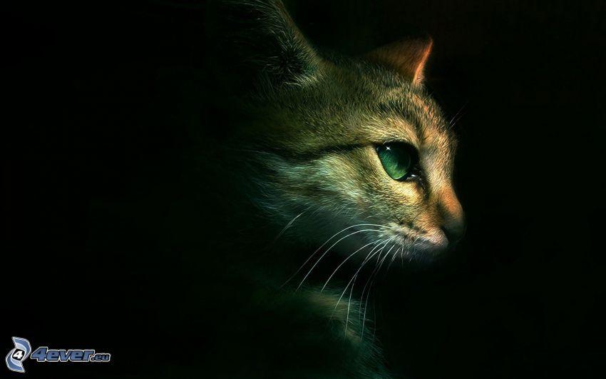 rostro felino