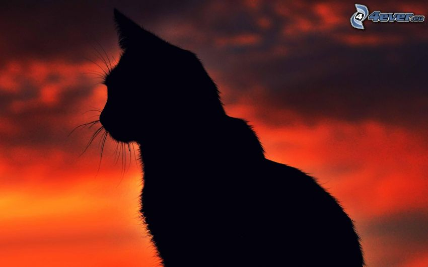 silueta de un gato, cielo rojo