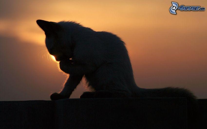 silueta de un gato, puesta del sol