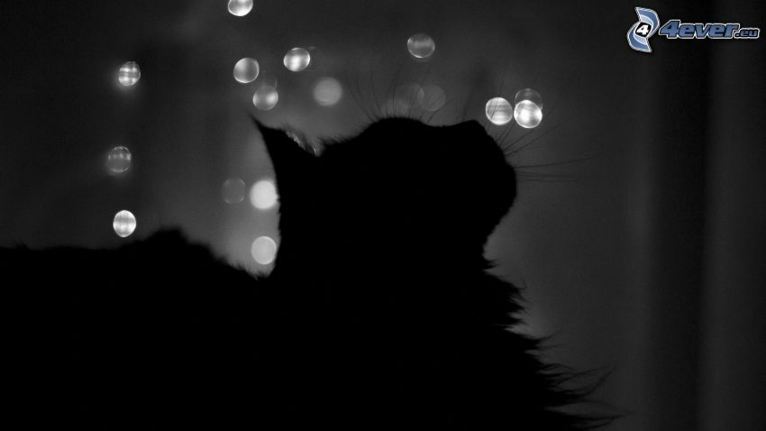 silueta de un gato