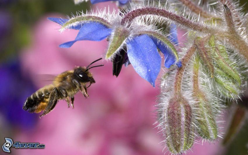 abeja, flor azul