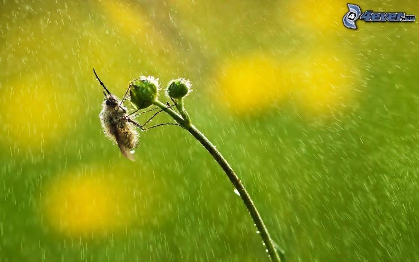 abeja, planta, gotas