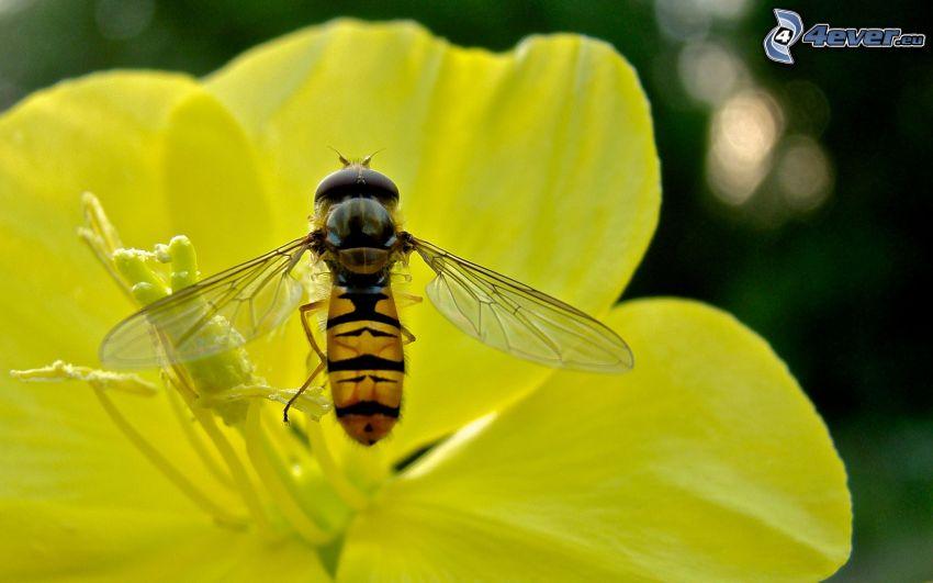 abeja en una flor, flor amarilla
