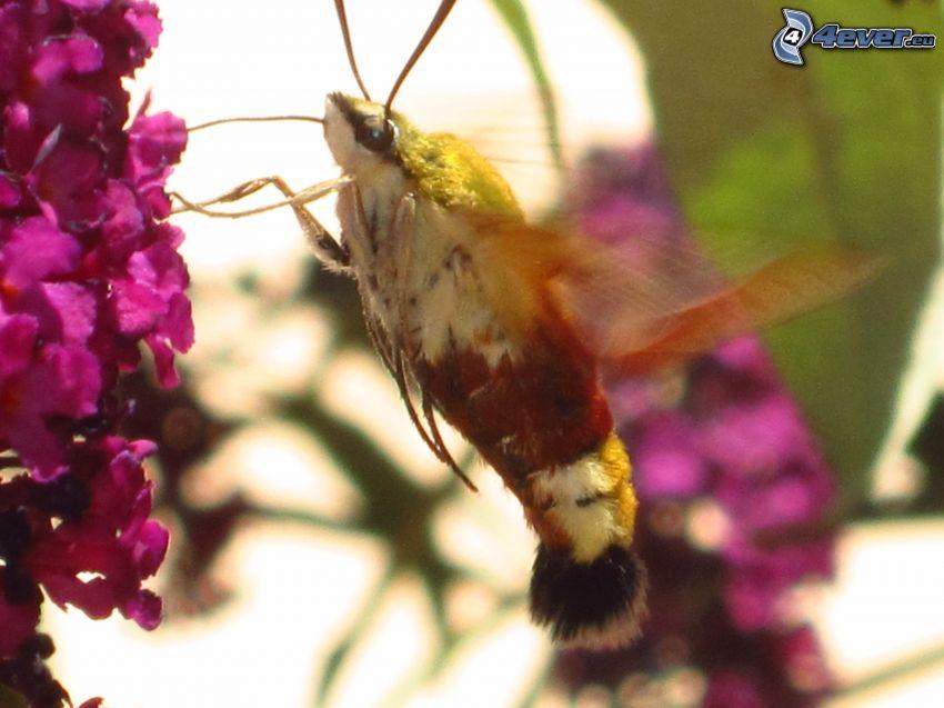 escarabajo, flores de color rosa