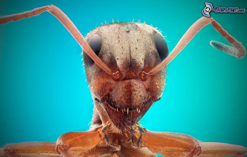 hormiga, macro