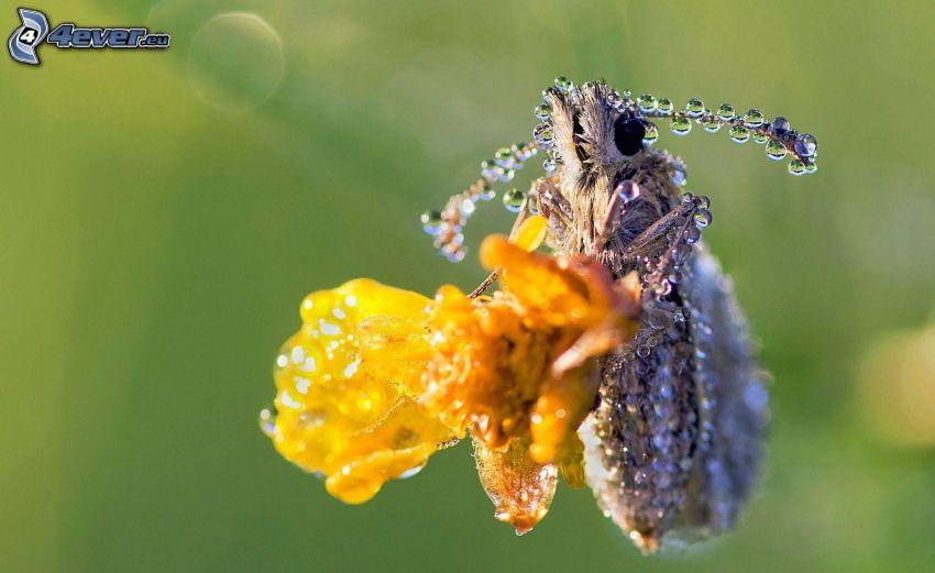 insecto, gotas