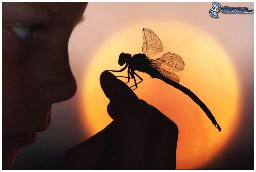 libélula, mano, chica, cara, sol